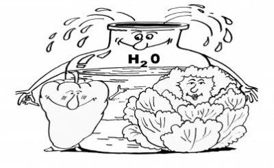Не поливать! Новые идеи в землепользовании на 6 сотках