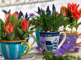 Выгонка цветов, или обман с пользой