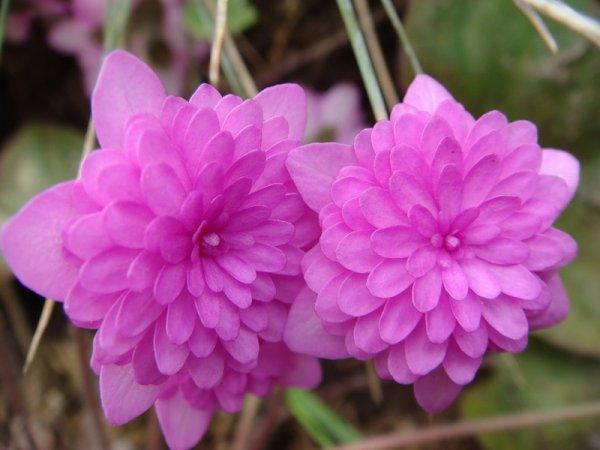 Редкие красивые цветы, достойные внимания и места в цветнике