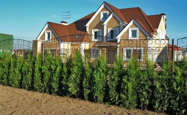 Какие растения подойдут для живой изгороди